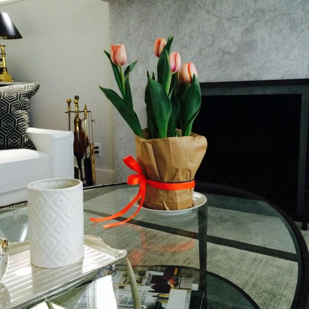 tulips - pve photo 2